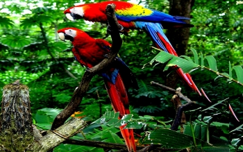 Animalia - Macaw Wallpapers and Backgrounds ID : 449408