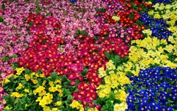 Earth - Primrose Wallpapers and Backgrounds ID : 450753