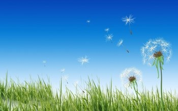 Earth - Dandelion Wallpapers and Backgrounds ID : 451087