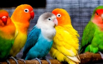 Animal - Parrot Wallpapers and Backgrounds ID : 451348