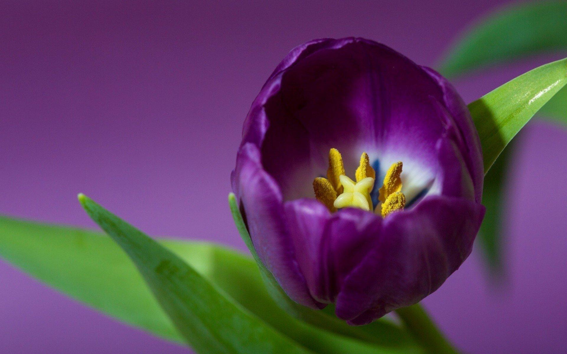 Next Purple Floral Wallpaper