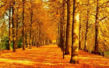 Earth - Autumn Wallpapers and Backgrounds ID : 453317