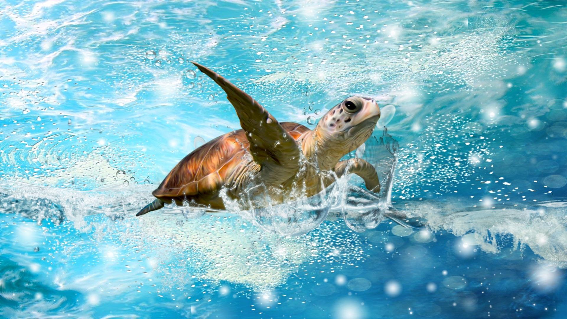 Wallpaper : turtle, water, beach, shell 1920x1440