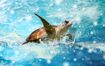 Dierenrijk - Sea Turtle Wallpapers and Backgrounds ID : 454472