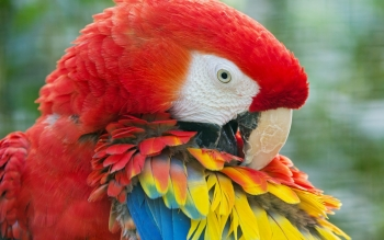 Animalia - Macaw Wallpapers and Backgrounds ID : 456069