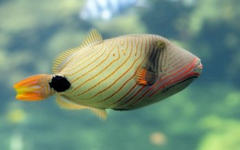Animal - Fish Wallpapers and Backgrounds ID : 456428