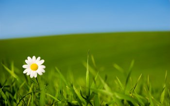 Earth - Daisy Wallpapers and Backgrounds ID : 459277