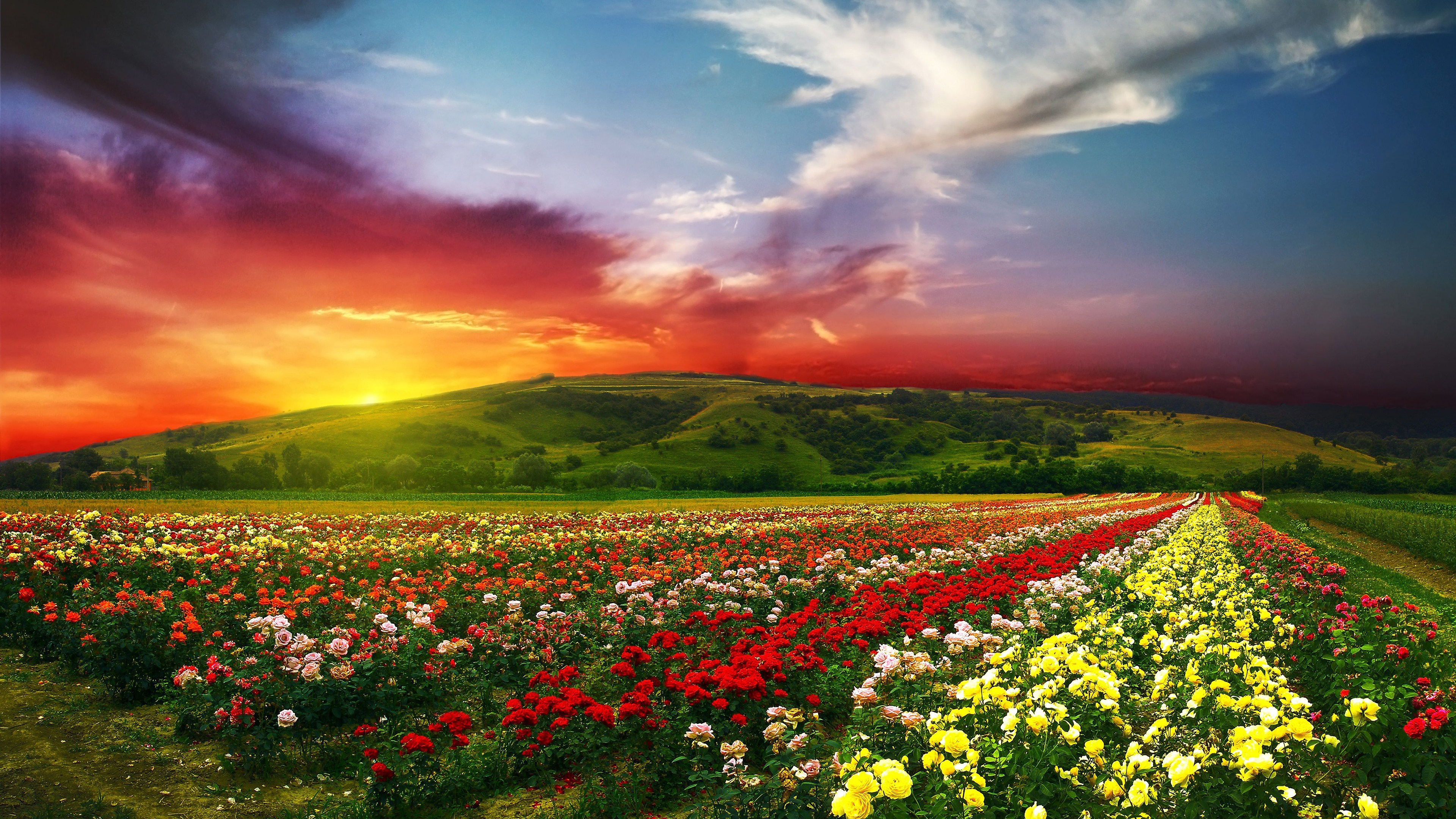 Flower garden 4k ultra hd wallpaper and background image - Colorful nature pics ...