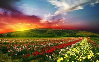 777 4k Ultra Hd Flower Wallpapers Background Images Wallpaper Abyss **high quality and high definition wallpaper app. 777 4k ultra hd flower wallpapers