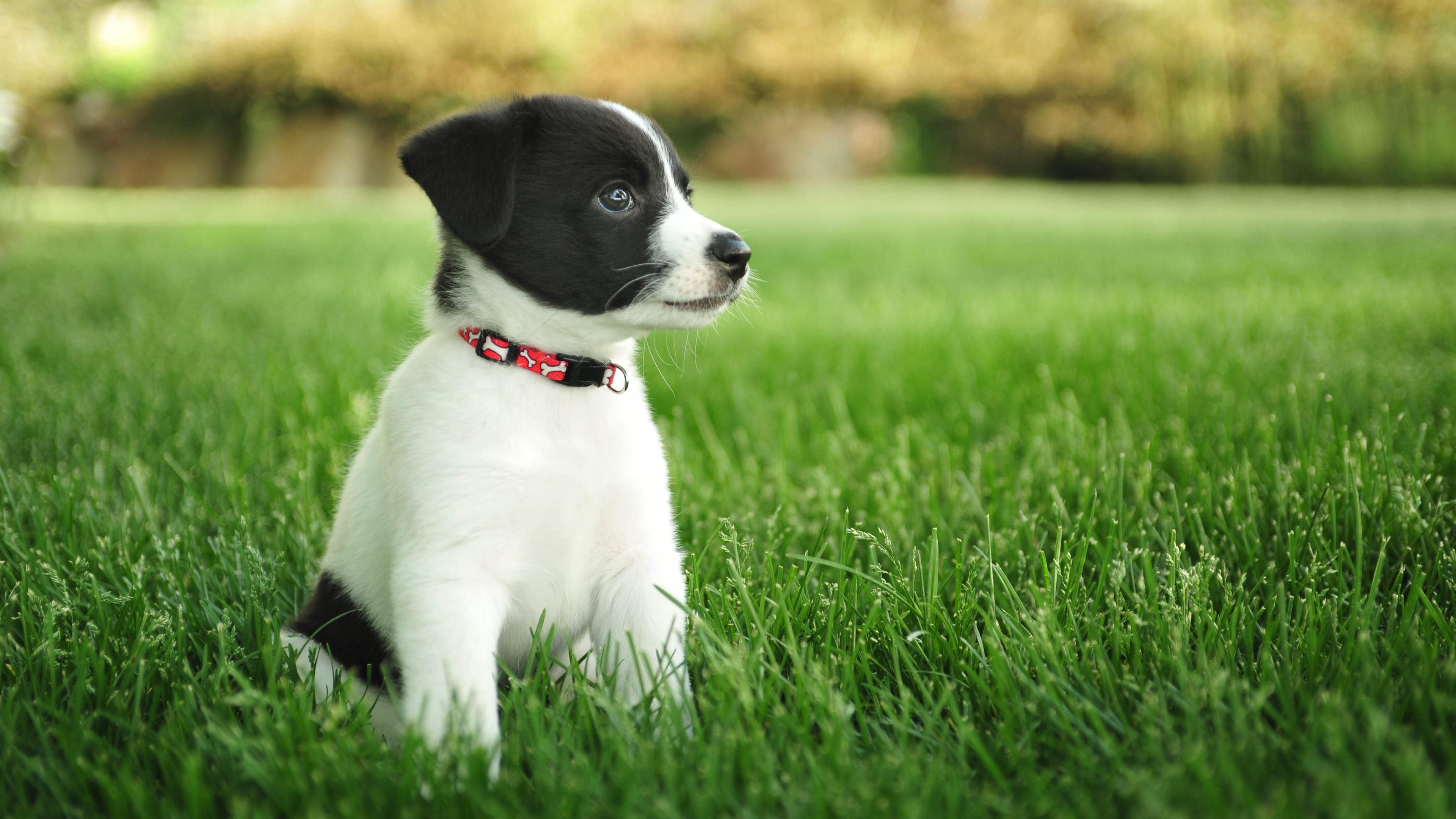 563 puppy hd wallpapers | background images - wallpaper abyss