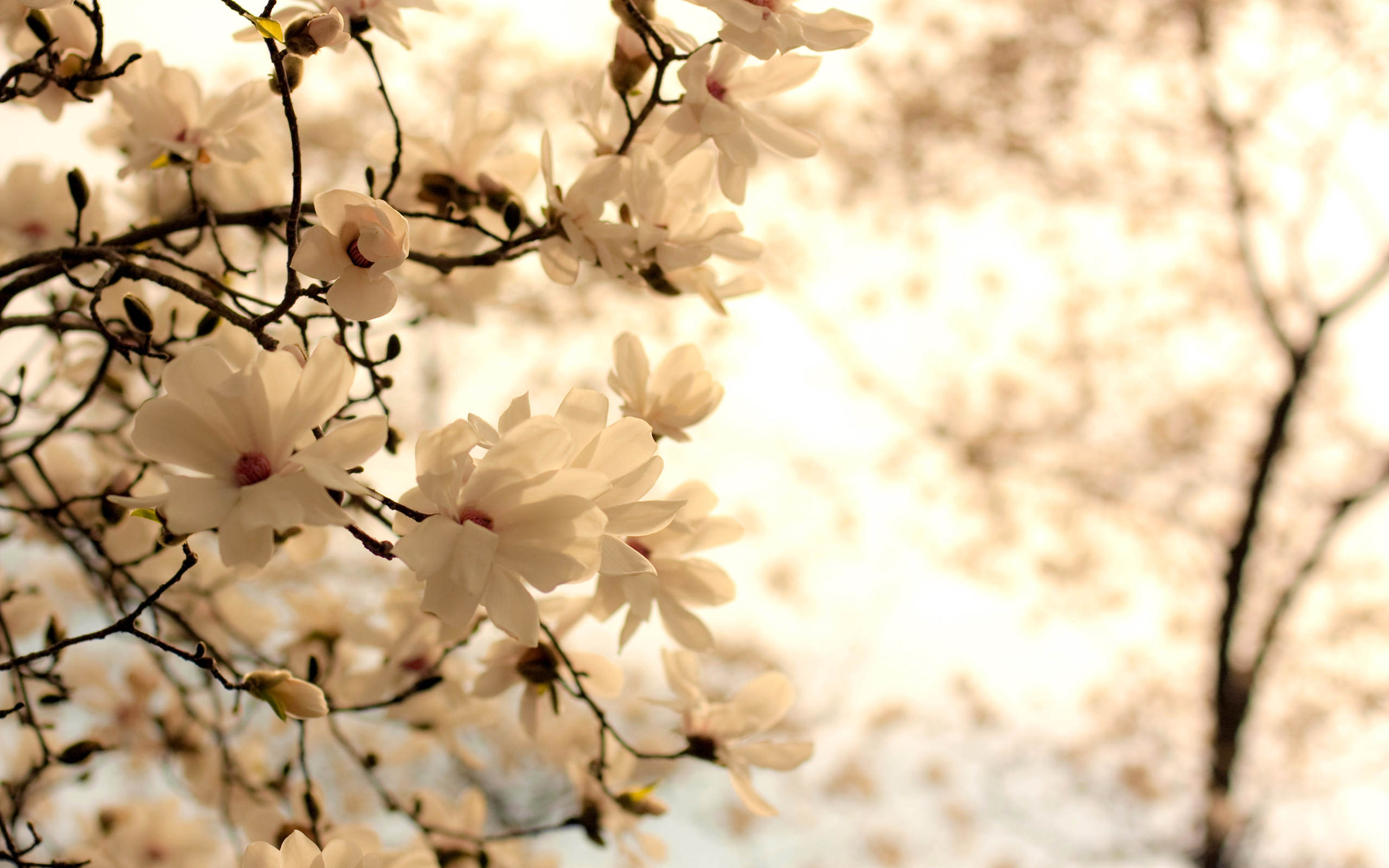 Flowers hd wallpaper background image 2560x1600 id468198 wallpapers id468198 mightylinksfo