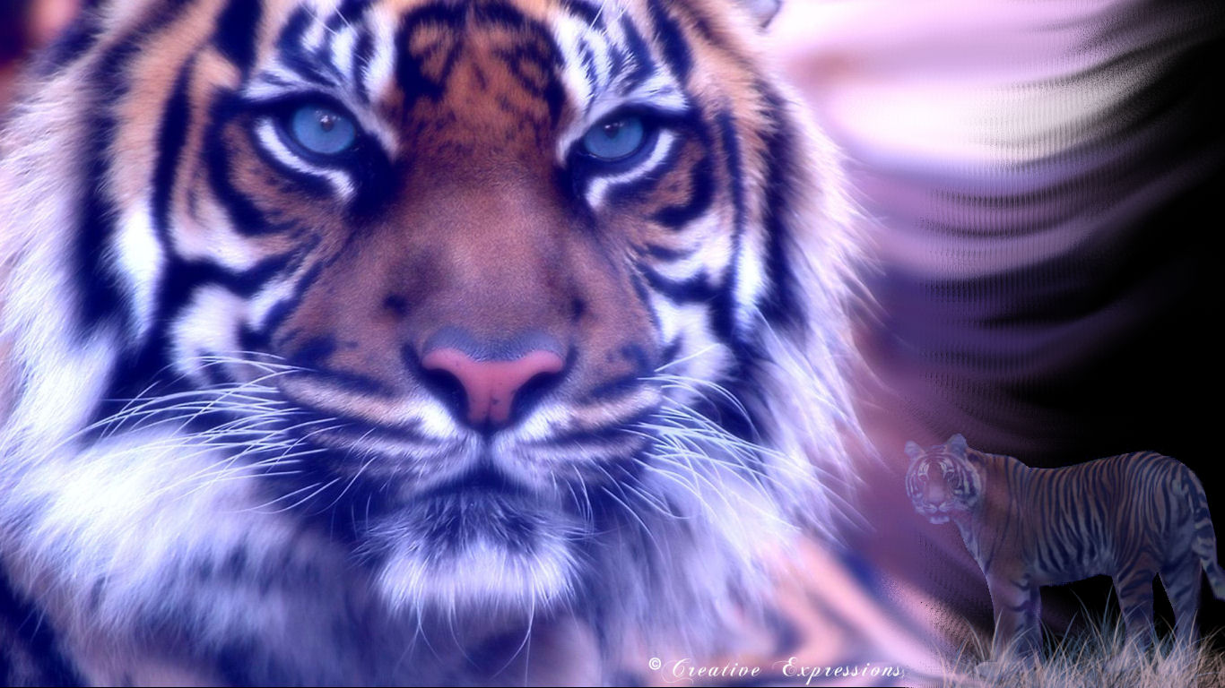 baby tiger iphone 5 wallpaper