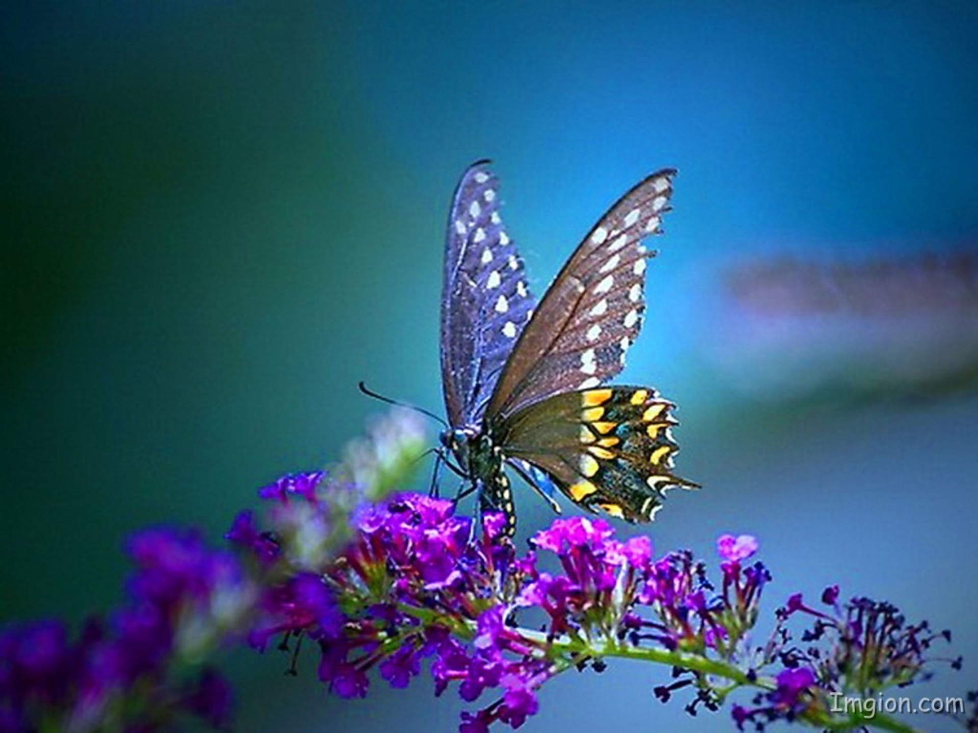 Pretty Background Pictures: Butterfly HD Wallpaper