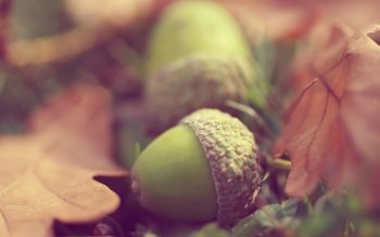 Tierra - Acorn Wallpapers and Backgrounds ID : 472815