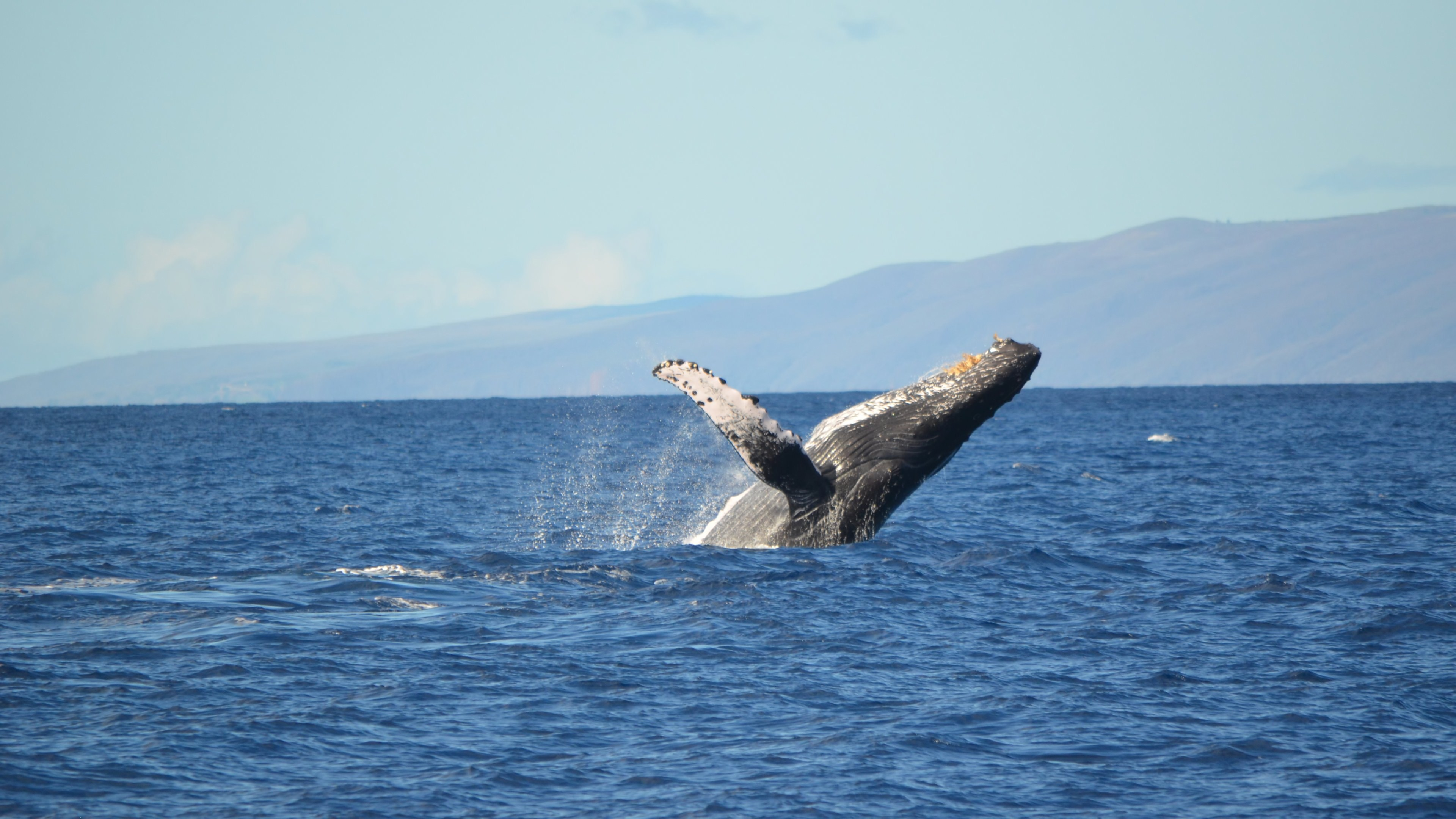 Whale 4k ultra hd wallpaper and background image 3840x2160 id 478053 - Background images 4k hd ...