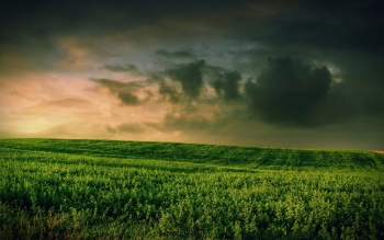 Erde - Feld Wallpapers and Backgrounds ID : 478452