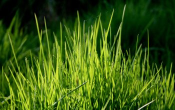 Earth - Grass Wallpapers and Backgrounds ID : 479974