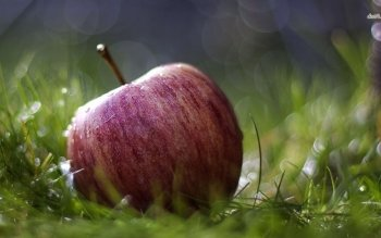 Alimento - Apple Wallpapers and Backgrounds ID : 480581