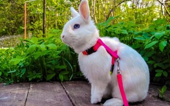 Animal - Rabbit Wallpapers and Backgrounds ID : 480816