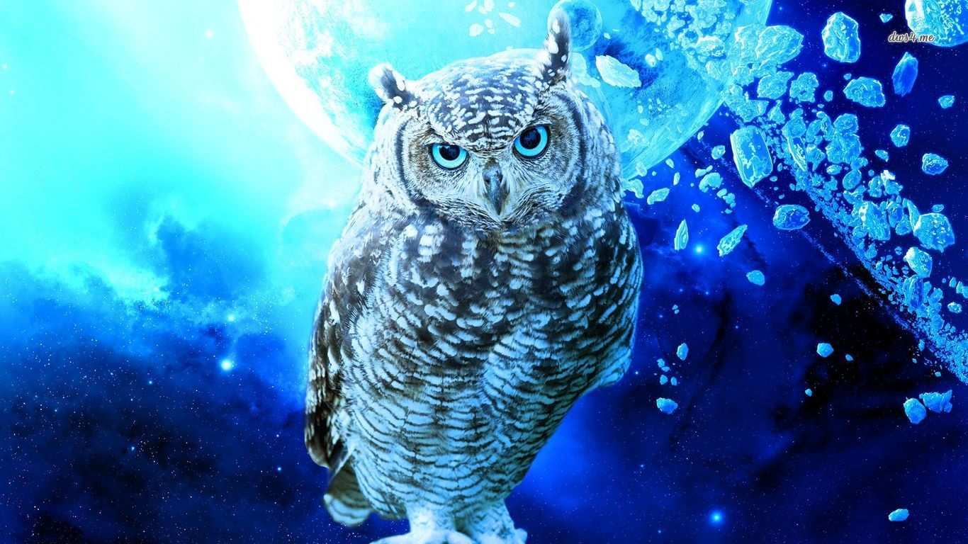 Owl Wallpaper And Background Image