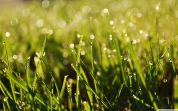 Earth - Grass Wallpapers and Backgrounds ID : 482738