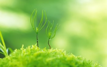 Earth - Grass Wallpapers and Backgrounds