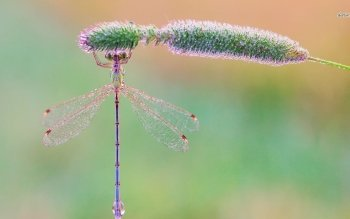 Animal - Dragonfly Wallpapers and Backgrounds ID : 487597
