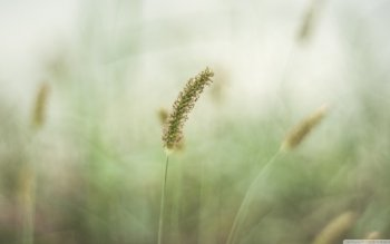 Earth - Grass Wallpapers and Backgrounds ID : 488596