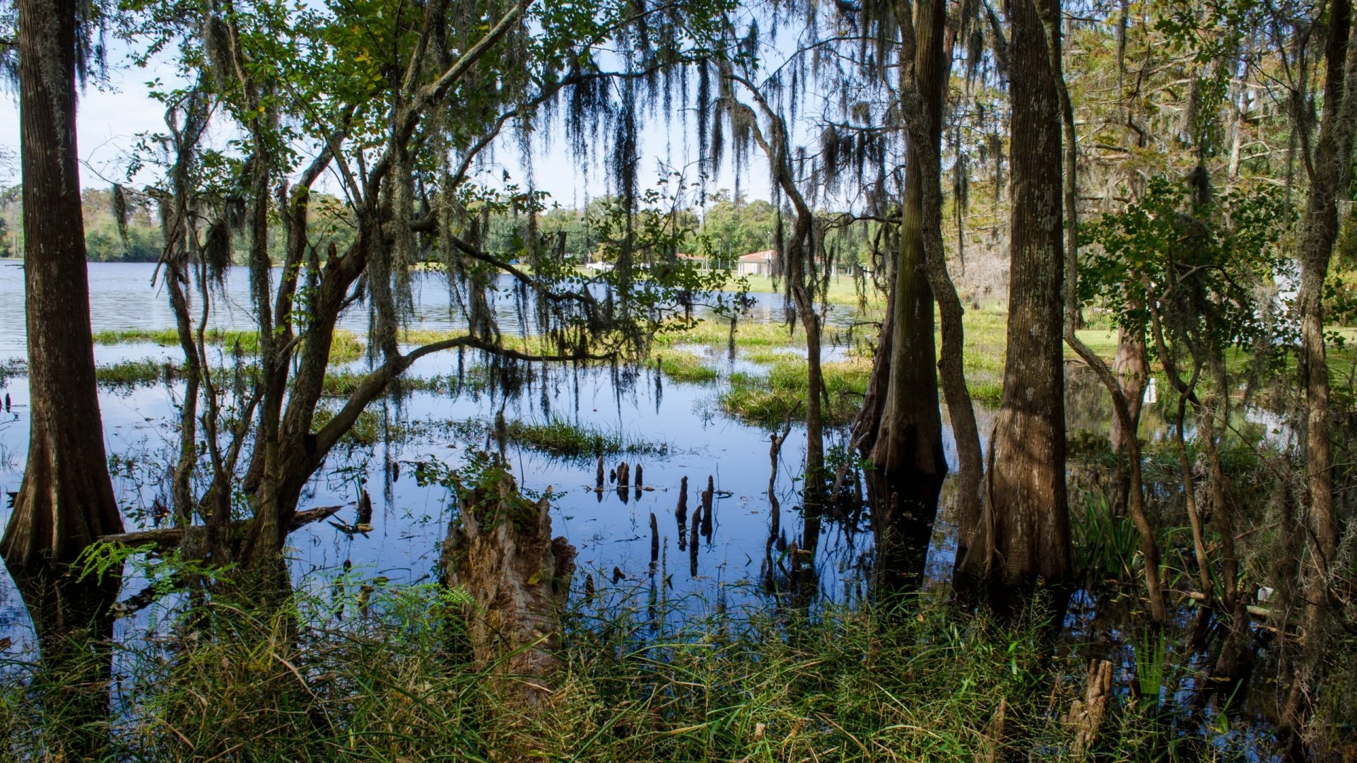 Swamp Full Hd Wallpaper And Background 2560x1440 Id 489060