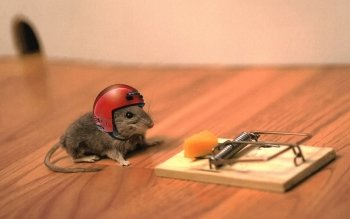 Humor - Mouse Wallpapers and Backgrounds ID : 489030