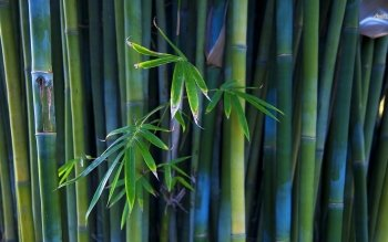 Tierra - Bamboo Wallpapers and Backgrounds ID : 490317