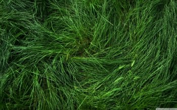 Earth - Grass Wallpapers and Backgrounds ID : 490368
