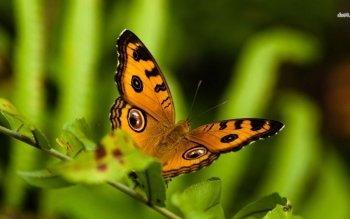 Animal - Butterfly Wallpapers and Backgrounds ID : 490638