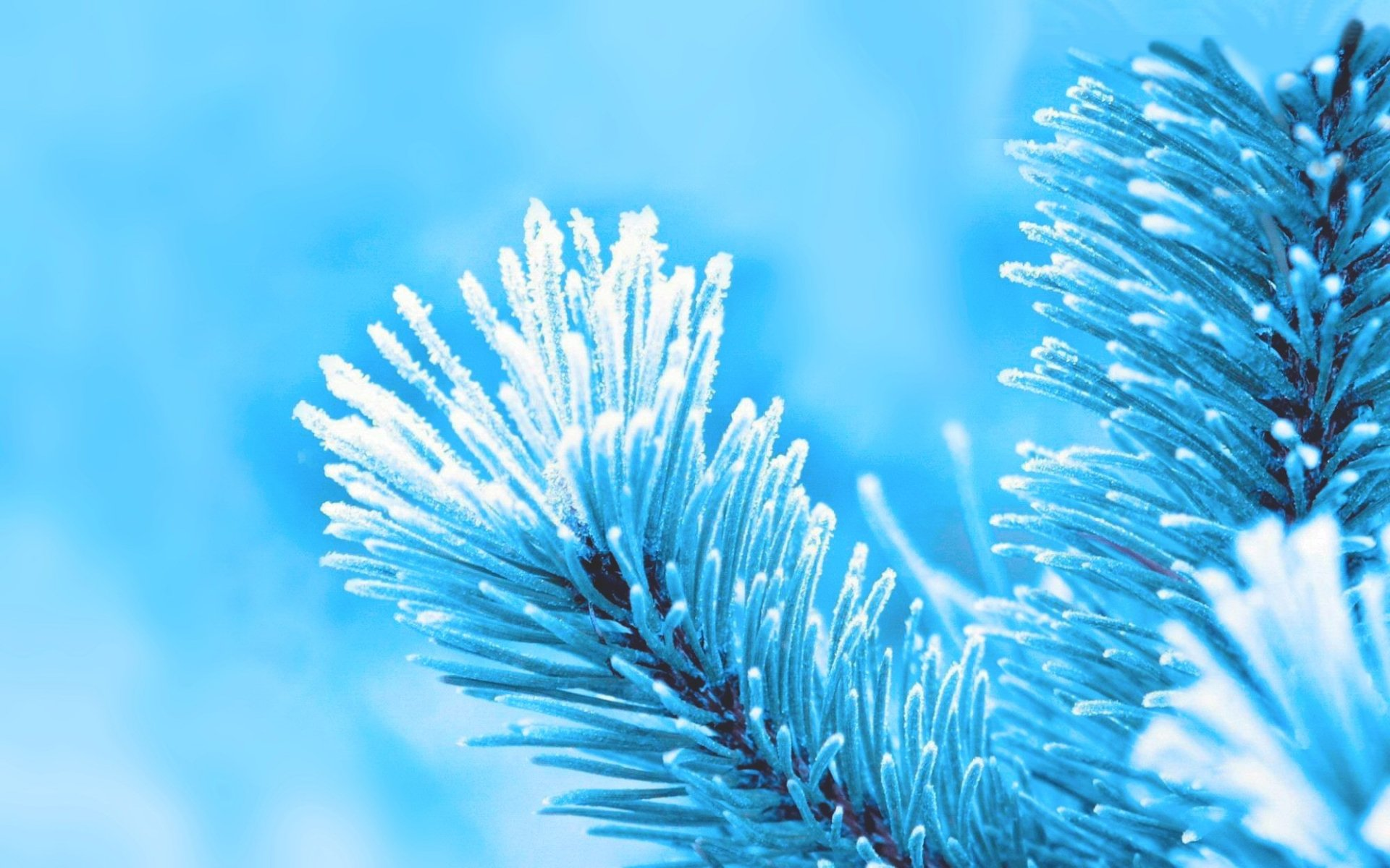 Photography - Winter  Nature Blue Wallpaper