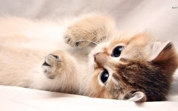 Animal - Cat Wallpapers and Backgrounds ID : 491112