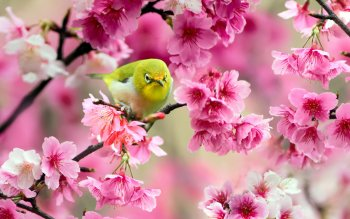 Animal - Bird Wallpapers and Backgrounds ID : 496311