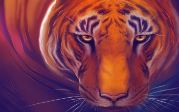 Animal - Tiger Wallpapers and Backgrounds ID : 497785