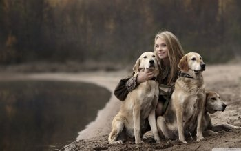 Animal - Golden Retriever  Wallpapers and Backgrounds ID : 501213