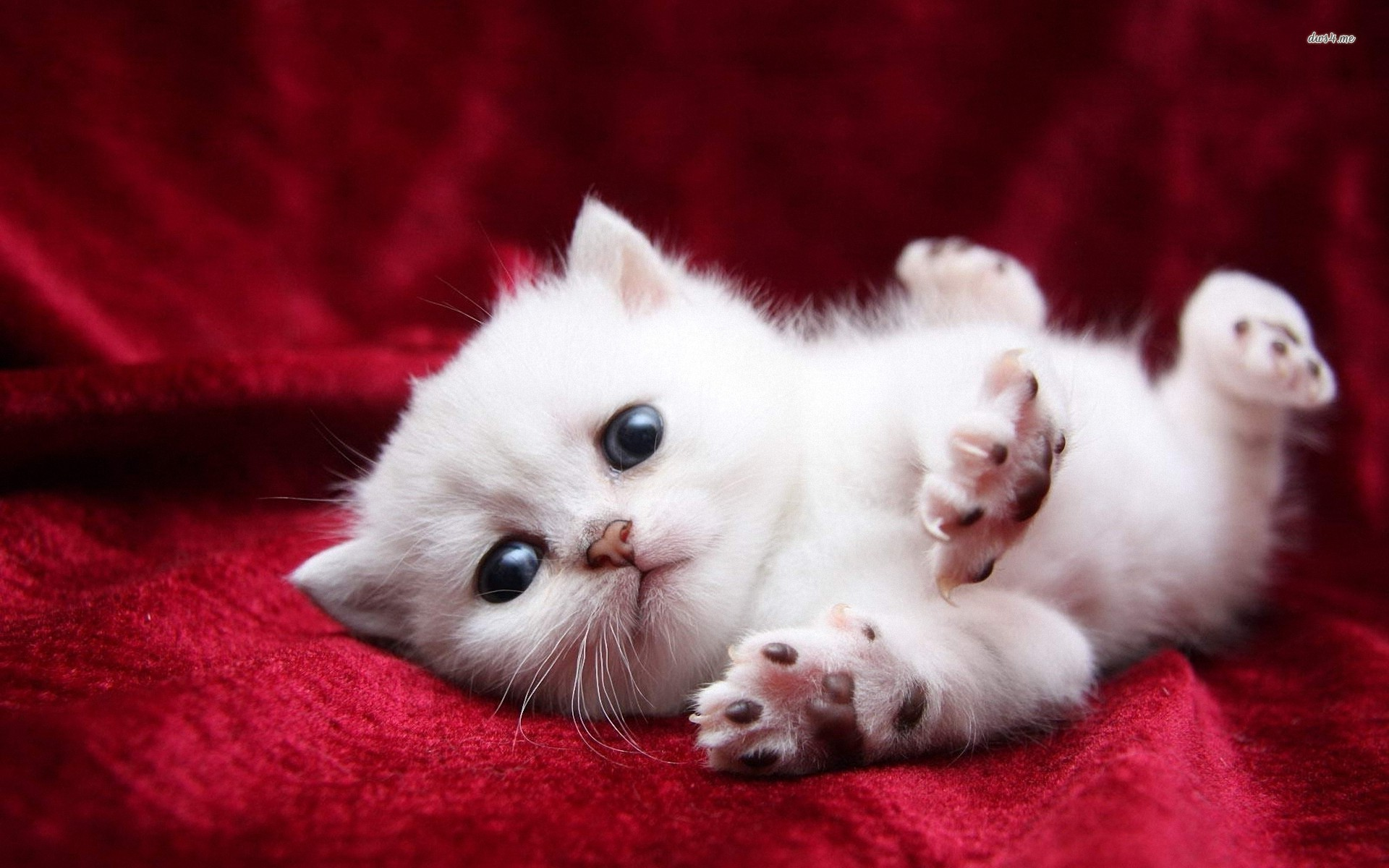 Kitten Full HD Wallpaper And Background Image