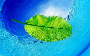 Earth - Leaf Wallpapers and Backgrounds ID : 502406