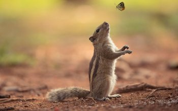 Animal - Squirrel Wallpapers and Backgrounds ID : 503725