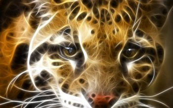 Animal - Tiger Wallpapers and Backgrounds ID : 509052