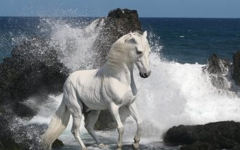 Animal - Horse Wallpapers and Backgrounds ID : 511429