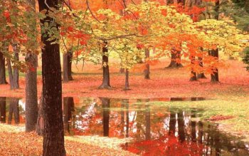 Earth - Autumn Wallpapers and Backgrounds ID : 512278