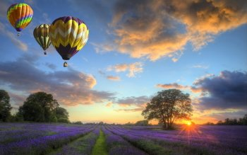 Vehicles - Hot Air Balloon Wallpapers and Backgrounds ID : 521662