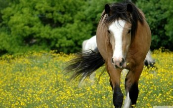 Animal - Horse Wallpapers and Backgrounds ID : 525801