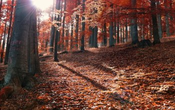 Earth - Autumn Wallpapers and Backgrounds ID : 528409