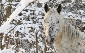 Animal - Horse Wallpapers and Backgrounds ID : 529728
