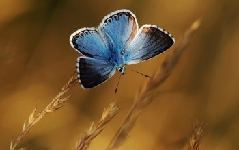 Animal - Butterfly Wallpapers and Backgrounds ID : 530739