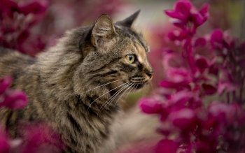 Animal - Cat Wallpapers and Backgrounds ID : 534105